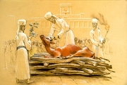 125265_sacrificiul-vaca-rosie-evrei_w180(1)